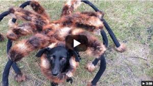 spiderdog
